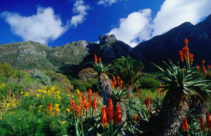 Image result for Kirstenbosch Botanical Gardens