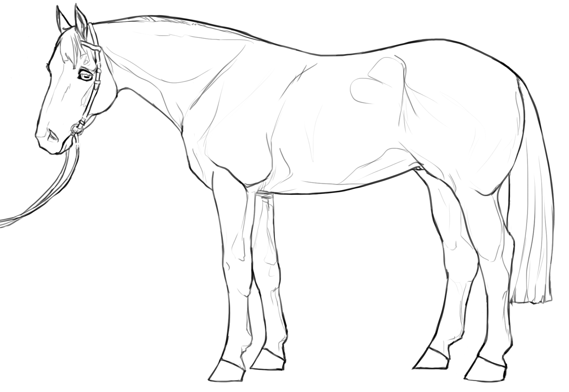 Stock Horse Lineart Set By Marathonstud On Deviantart