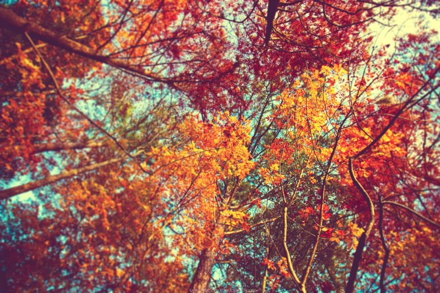 8tracks Radio Almost Autumn 14 Songs Free And Music