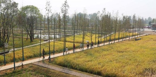 The Recovered Archaeological Landscape of Chengtoushan; Lixian County, China / Turenscape. Image Courtesy of World Architecture Festival