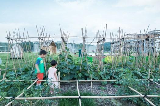 Community Garden. Image © Lianping Mao