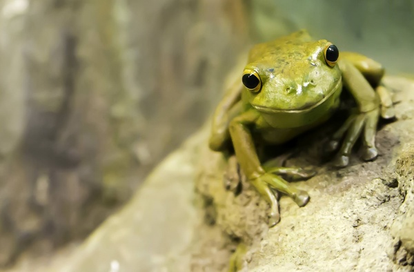 Amphibians Free Stock Photos Download 53 Free Stock
