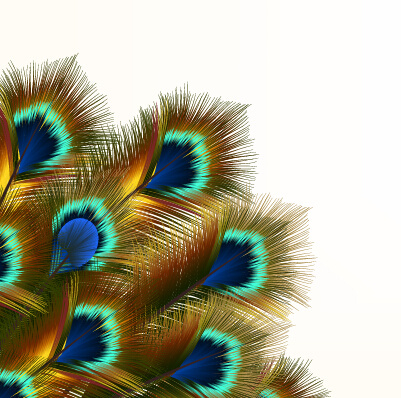 Peacock Feather Vector Design Free Vector Download 477