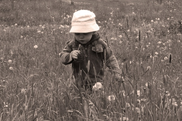 child in the meadow