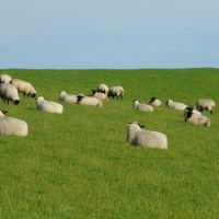 IN THE CENTRE OF THE SHEEPFOLD (SONG LYRICS)