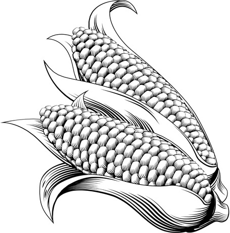 Corn Free Vector Download 119 Free Vector For Commercial