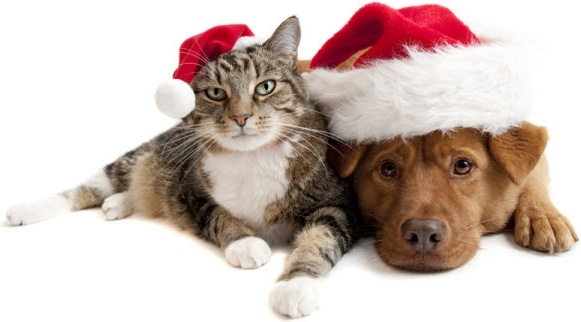 lovely christmas cats and dogs highdefinition picture
