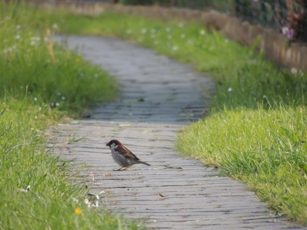 path bird grass