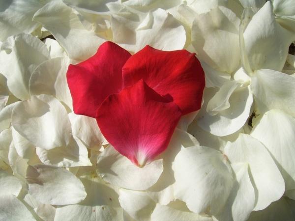 red heart petal