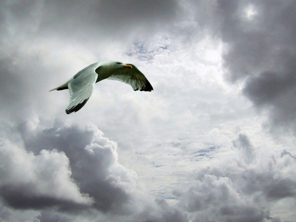 skyscape with seagull