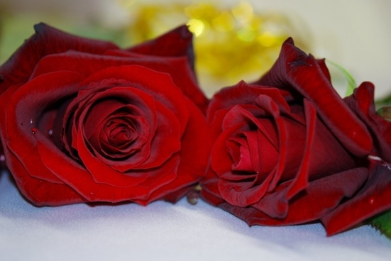 Symbols of love - The most popular, red roses.