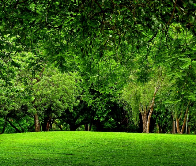 Green Forest Full Hd Wallpaper And Background Image X Id