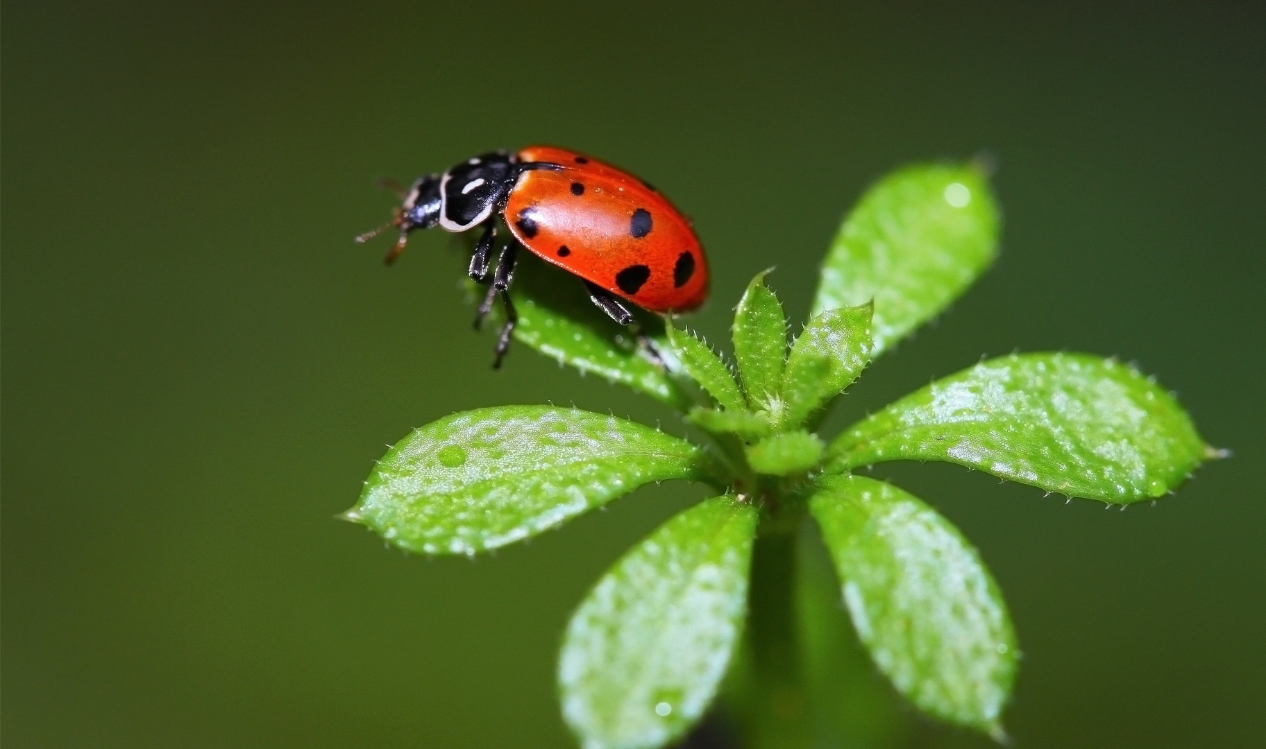 sorted ladybug picture on animal picture society