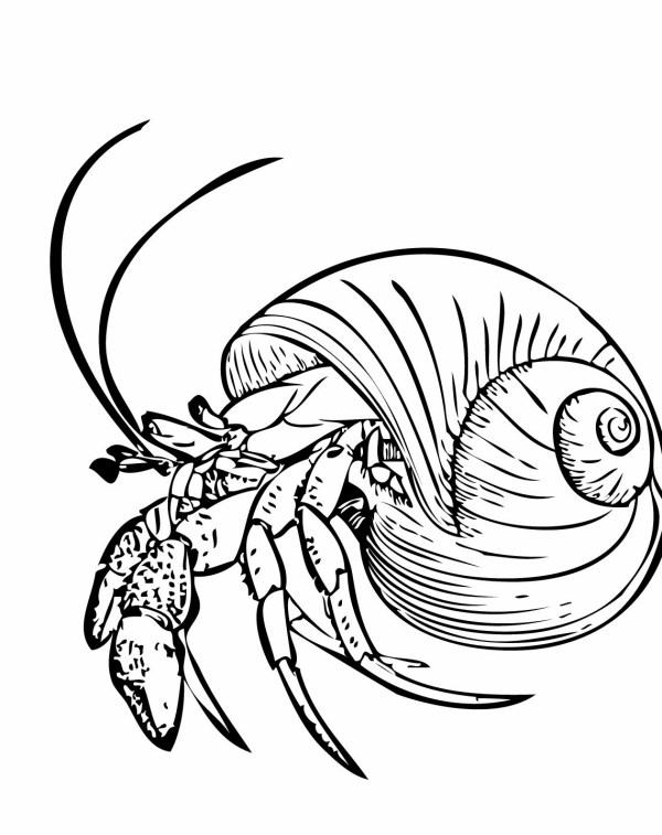 hermit crab coloring page # 68