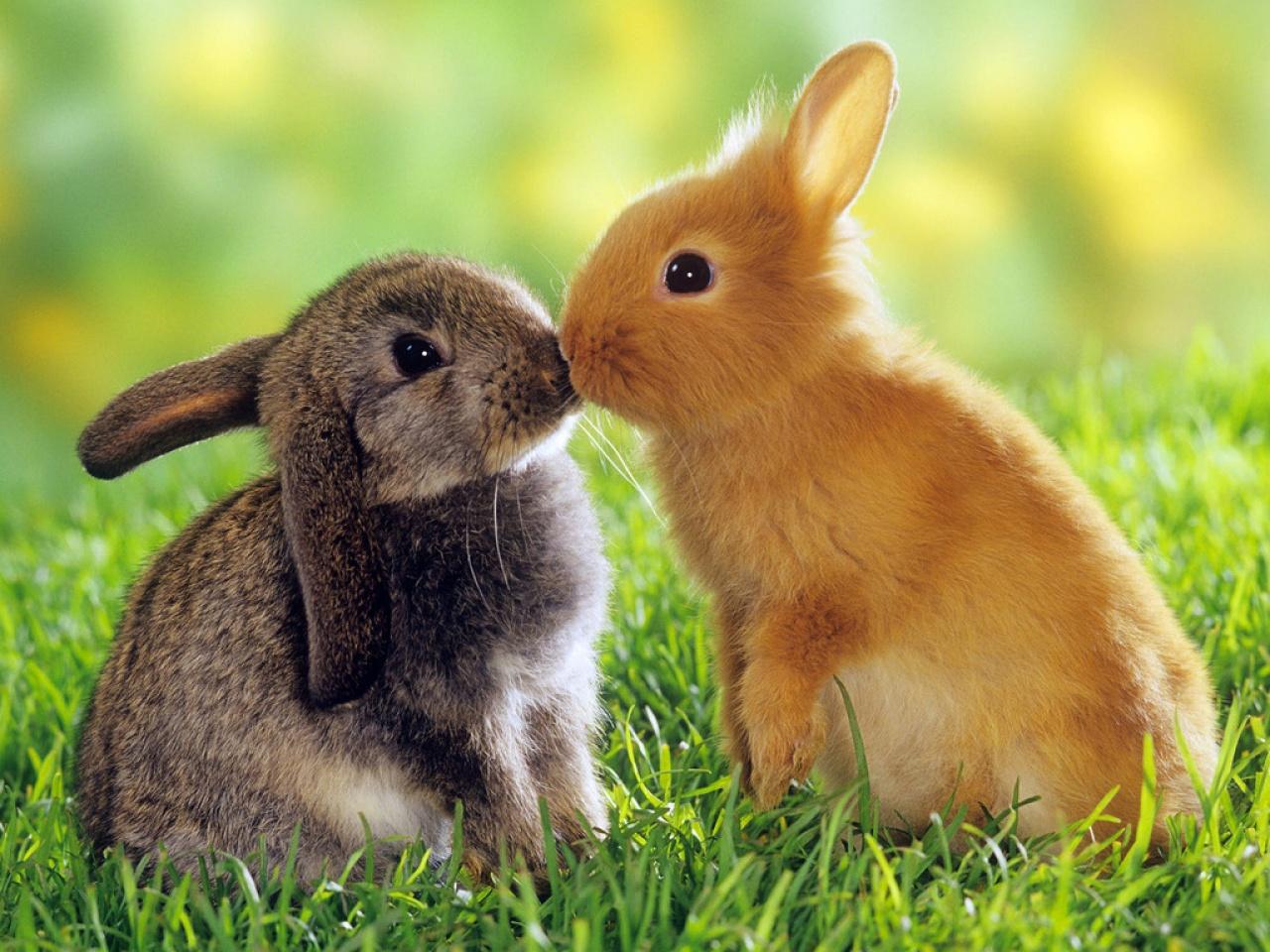 Una victoria histórica para los conejos de Europa