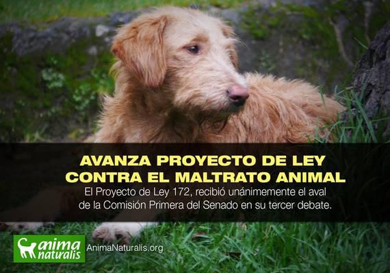 Avanza proyecto de ley que penaliza el maltrato animal en Colombia