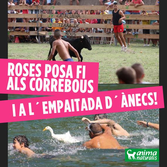 ¡Victoria! Roses renuncia a la 'empaitada' de patos y al 'correbou' de la Fiesta Mayor