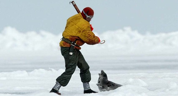 ¡Juntos podemos terminar con la matanza de focas en Canadá!