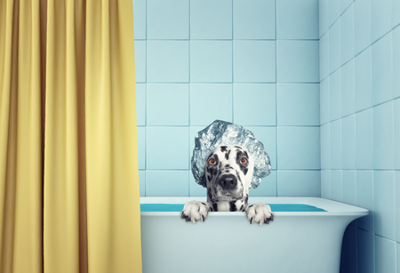 cute wet dog in the bath stock images page everypixel
