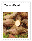 Yacon Root – Prebiotic