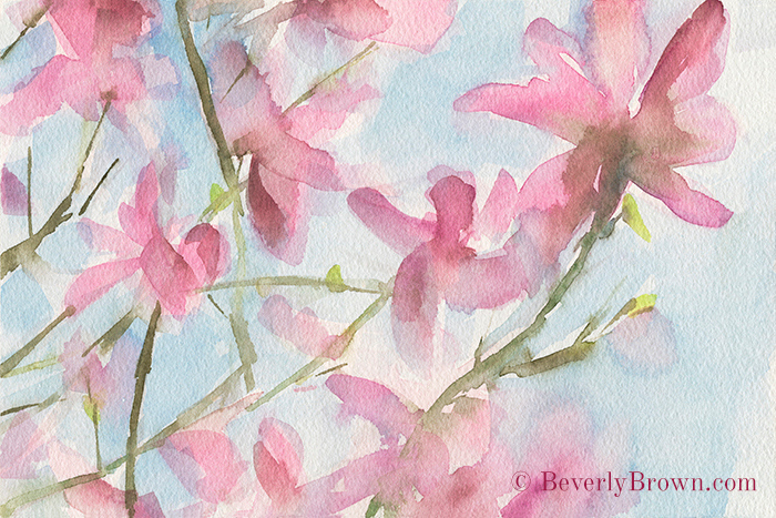 Pink Magnolias Blossoms Watercolor Painting by Artist Beverly Brown | Fine Art Prints from $30 | www.beverlybrown.com