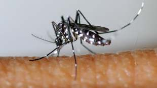First indigenous case of dengue detected in Toulon this year
