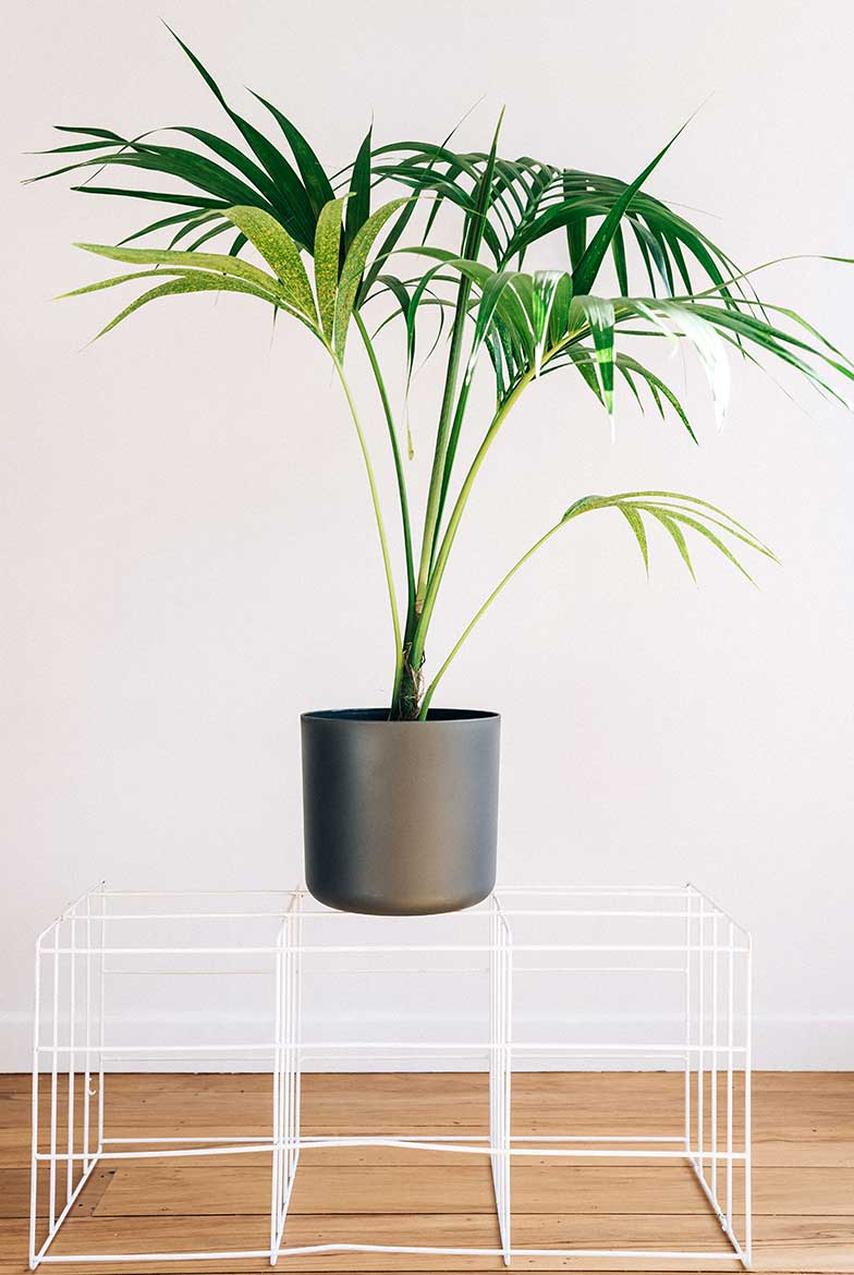 Air Care Plants Indoors