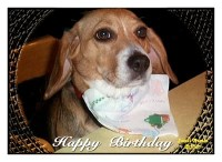Beagle Birthday Cards Click for many designs