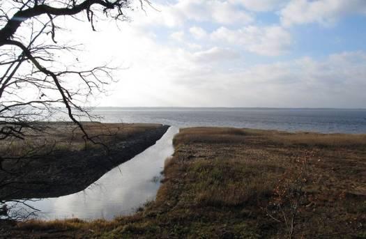 Pienen joen suu ruohikkoisella järvenranta-alueella.