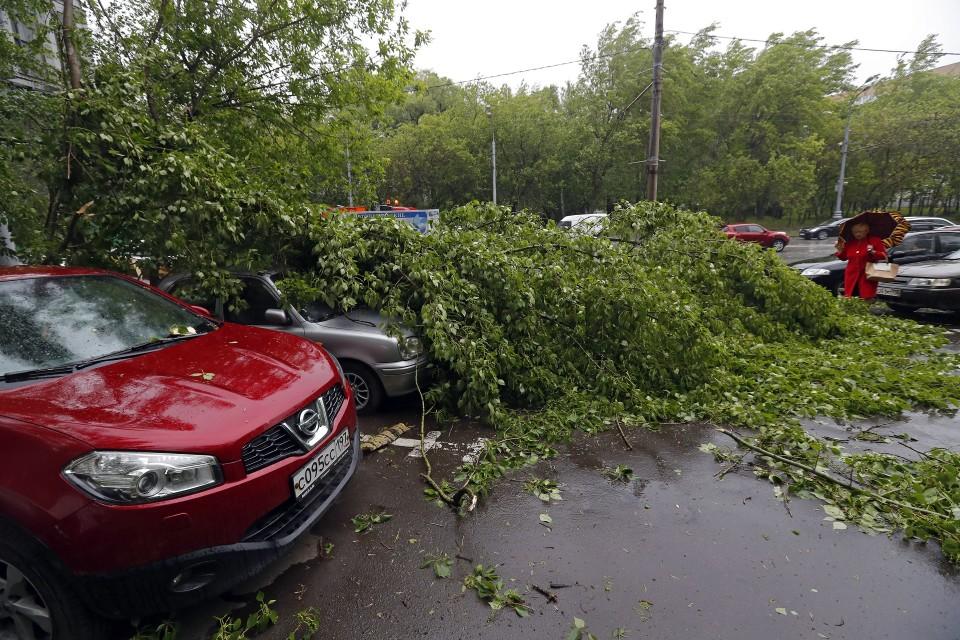 Kaatuneiden puiden alle jääneitä autoja.
