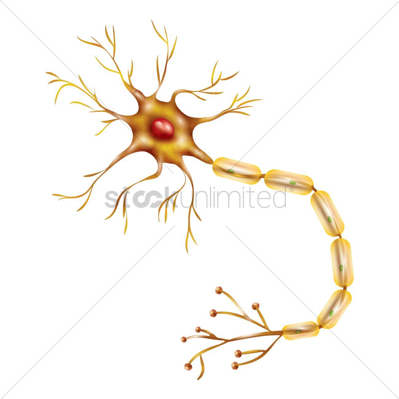 Motor Neuron Vector Image