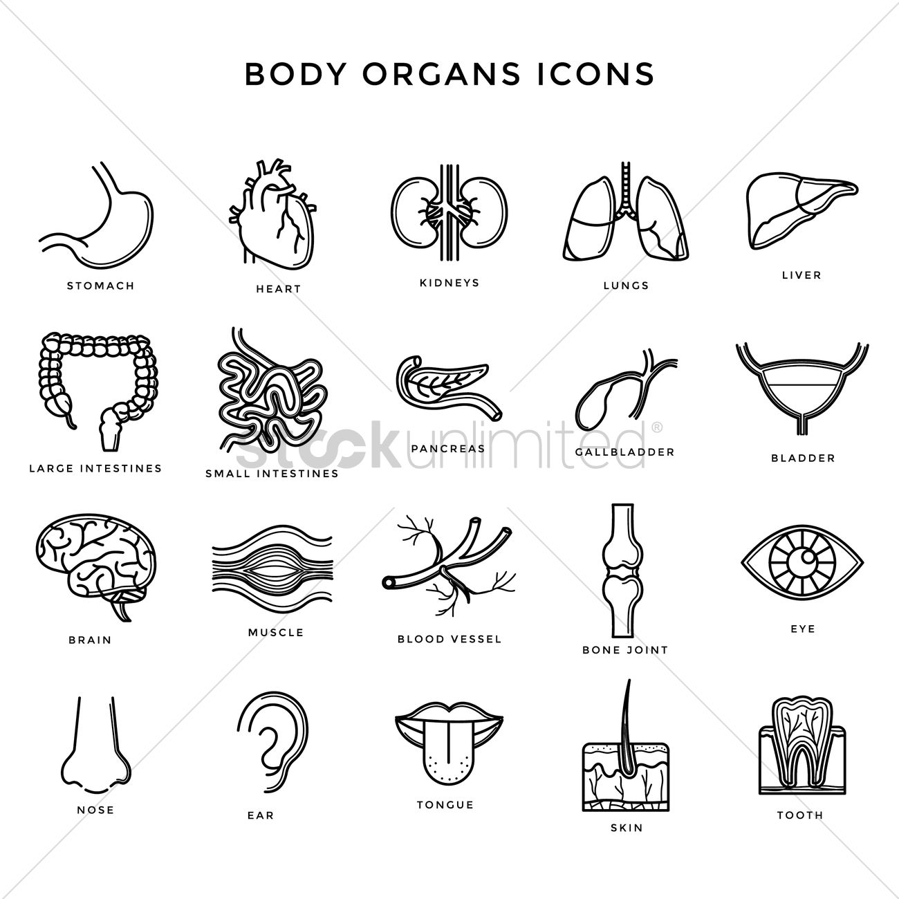 Set Of Body Organs Icons Vector Image