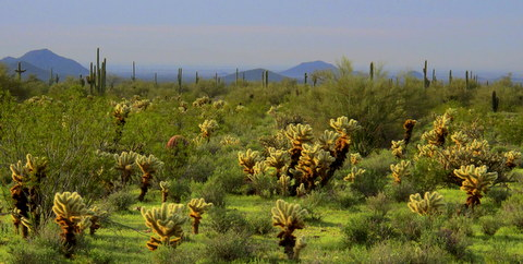 Even the cactus was beautiful and lush at the ATV Campground.