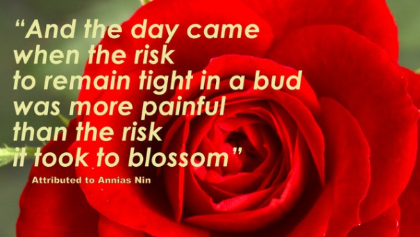Bloom-rose-640