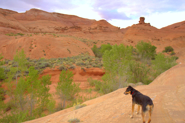 We were camped at a trailhead that we walked back on and it was an amazing walk! Here is Cody looking down at the trail.