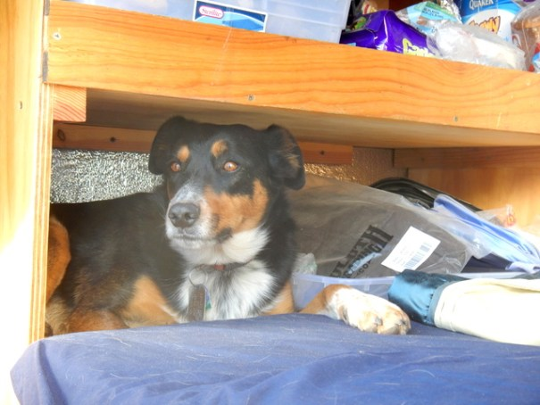 Cody hiding out in the tiniest space he could find.