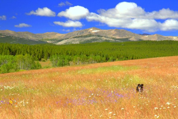 Cody got a chance to run around in the meadows and wildflowers. A Good time was had by all!