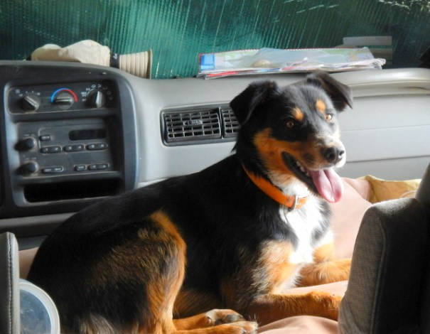 Cody fit right into my van like he was born to it. I think he has some of Homer in him!