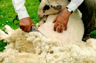 Conformity-Shearing