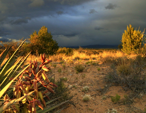 A storm just blew through the Cottonwood camp and  and gave us a beautifu light show. But then it quickly got hot and brought the Cedar Gnats outl