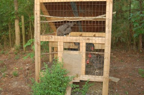 An inexpensive chicken coop.