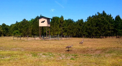 Birds near one of the campgrounds.
