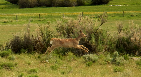 Finally, the yearling spotted mama and bolted back to her at full-speed ahead!