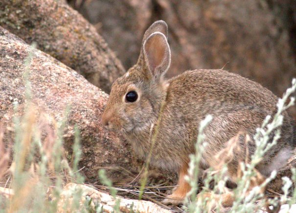 Forest fores must be good for rabbit populations, because it had exploded where we were camped.