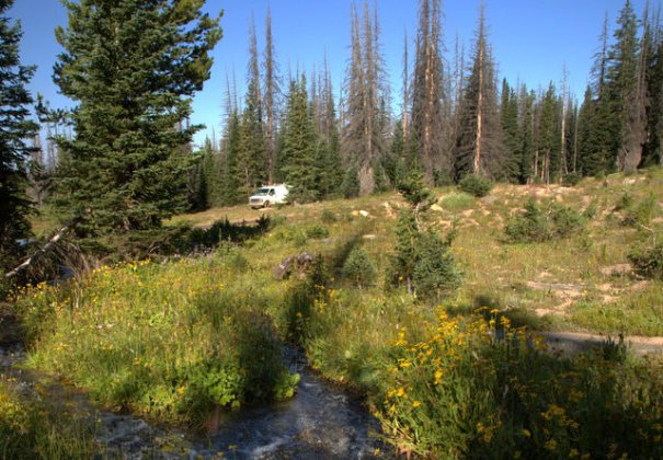 This was our camp off FR 103. It was by a creek with lots of wildflowers on it.
