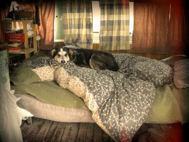 It takes lots of blankets and big dog on the bed to stay warm at thee temperatures!