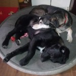 Kirkland Dog Bed Reviews In Pet Products Chickadvisor