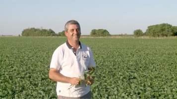 Fin de año con mejor rendimiento en el cultivo de soja