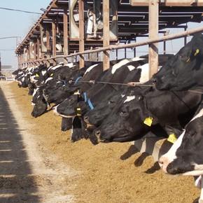 De grano a leche