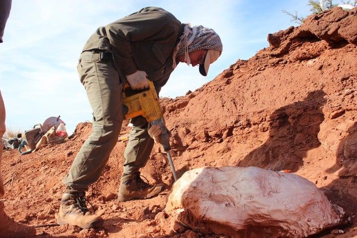 """Hallaron en San Juan al """"Ingentia prima"""", el dinosaurio gigante más antiguo conocido hasta ahora. (Foto: Agencia CTyS-UNLaM)"""